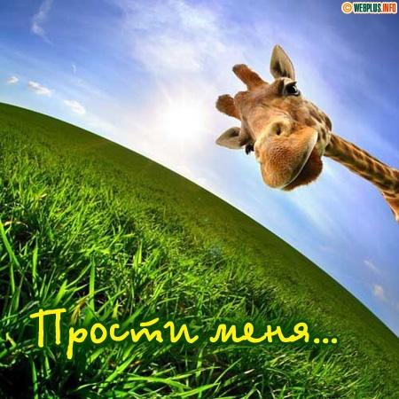 Прости меня! Жираф заглядывает