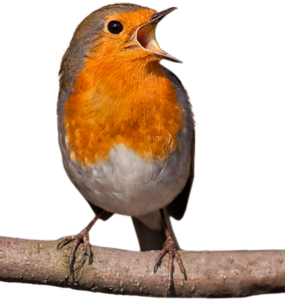 оранжевые пташки