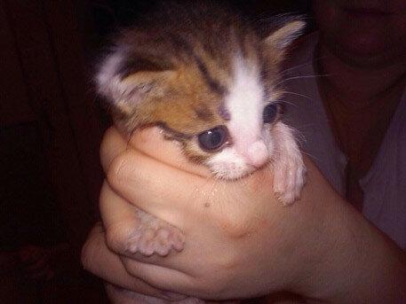 На убийцу котенка завели уголовное дело в Иркутской области