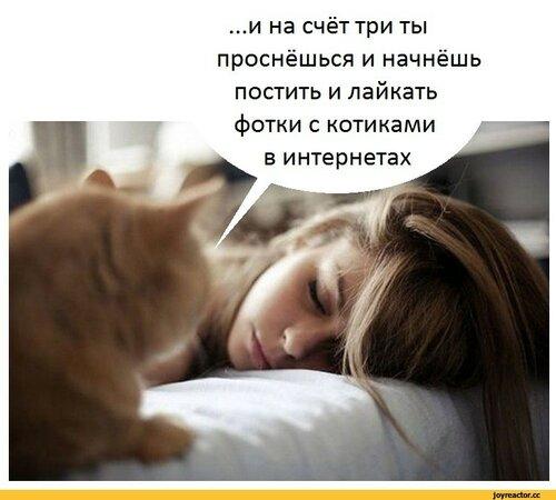 Прекрасное пожелание доброго утра с котами - Самые красивые и оригинальные живые открытки для любого праздника