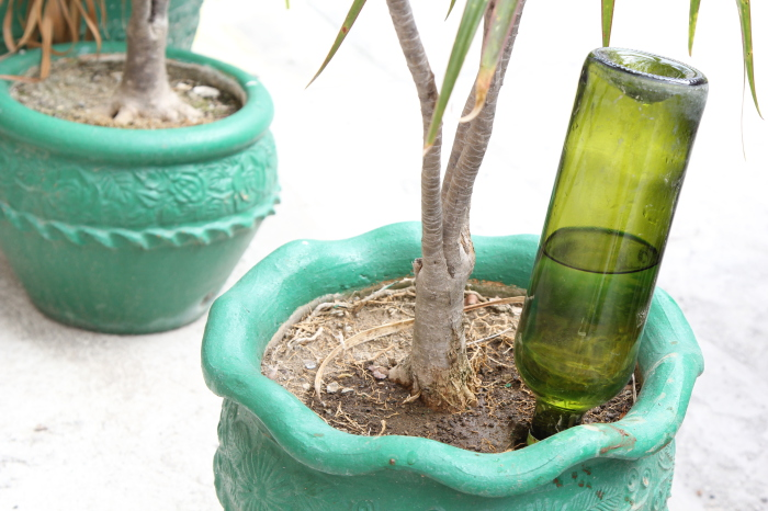1. «Поилка» для домашних растений