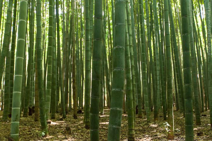 Киото. Бамбуковый лес и парк обезьян (25 фото)