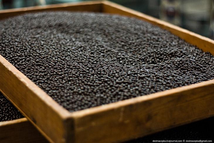 Фотографии и текст Вадима Махорова   Наверно, мечта многих — попасть на шоколадную фабрику.