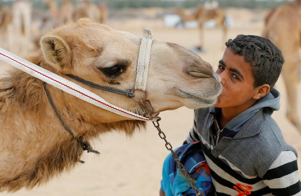 11. Победитель? (Фото Amr Abdallah Dalsh | Reuters):