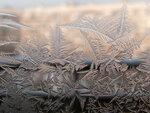 Зимняя флора