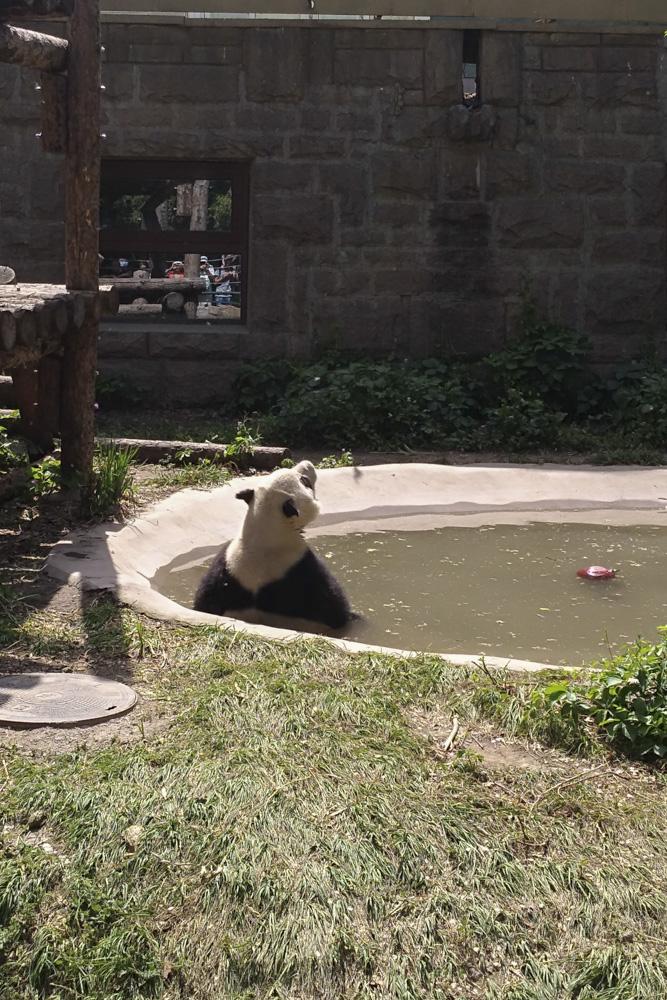 Китай, Пекин, зоопарк