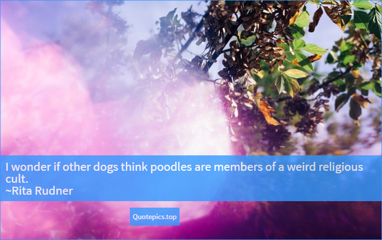 I wonder if other dogs think poodles are members of a weird religious cult. ~Rita Rudner