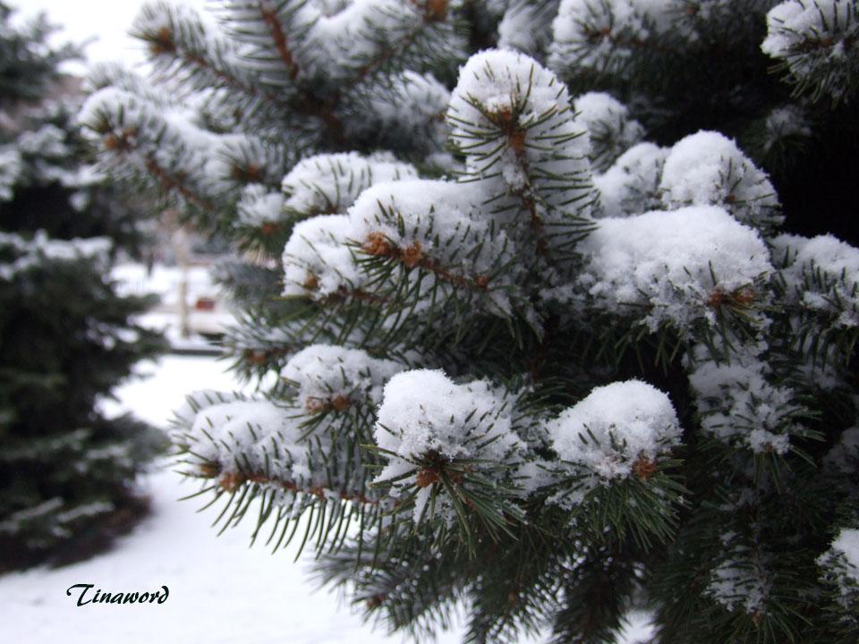 Вот-и-снег-05.jpg
