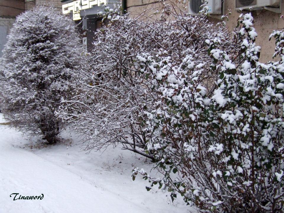 Вот-и-снег-8.jpg