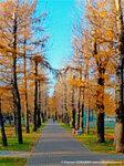 Парк у станции Солнечная