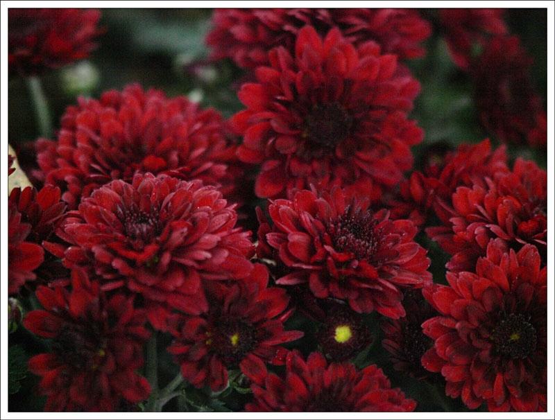 134_Flowers.jpg