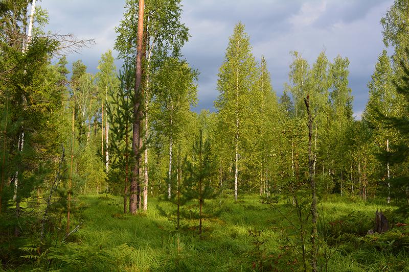 леса 15.jpg