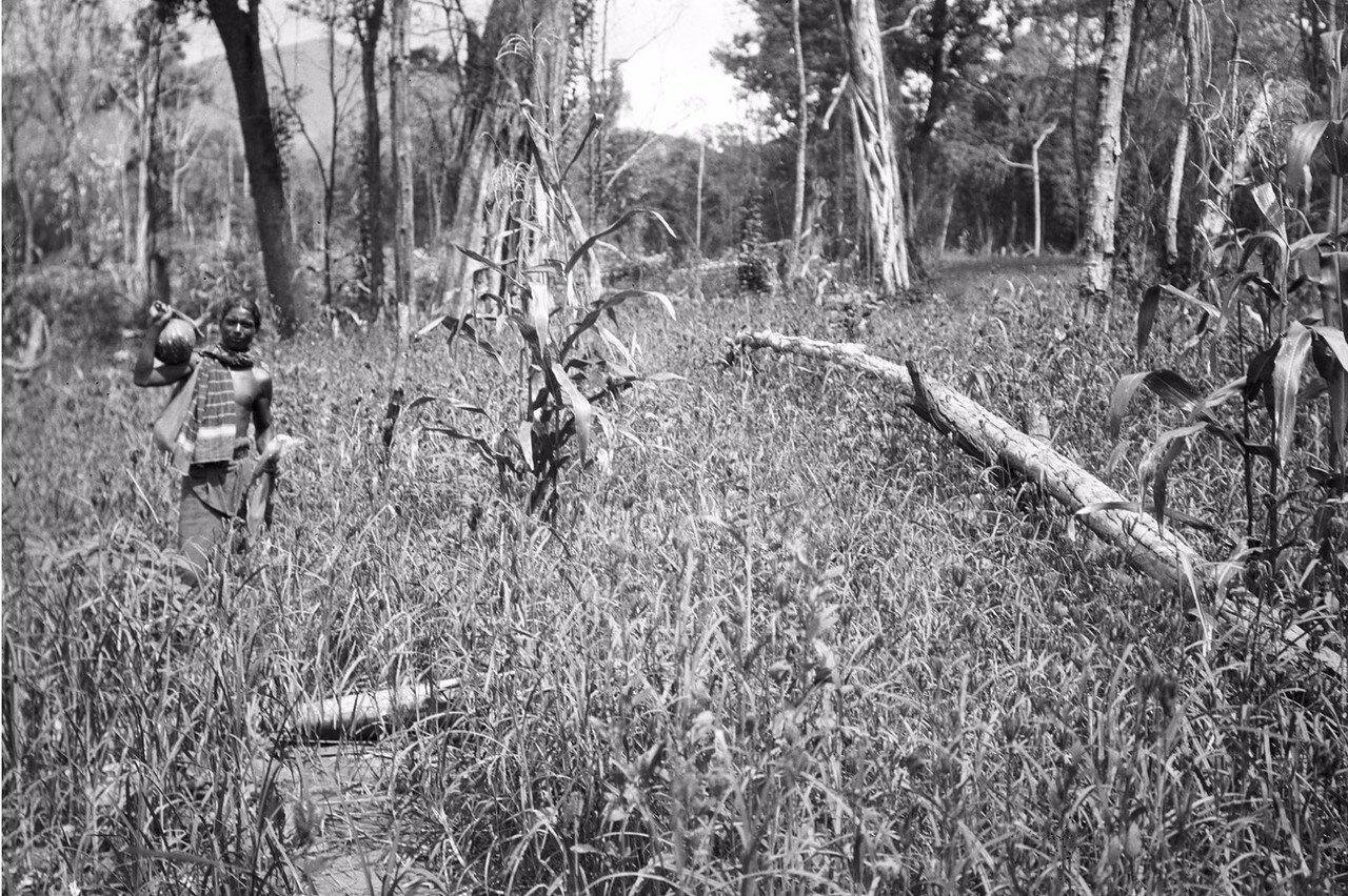 142. Ведд возле чена (небольшого участка), где занимаются подсечно-огневым земледелием