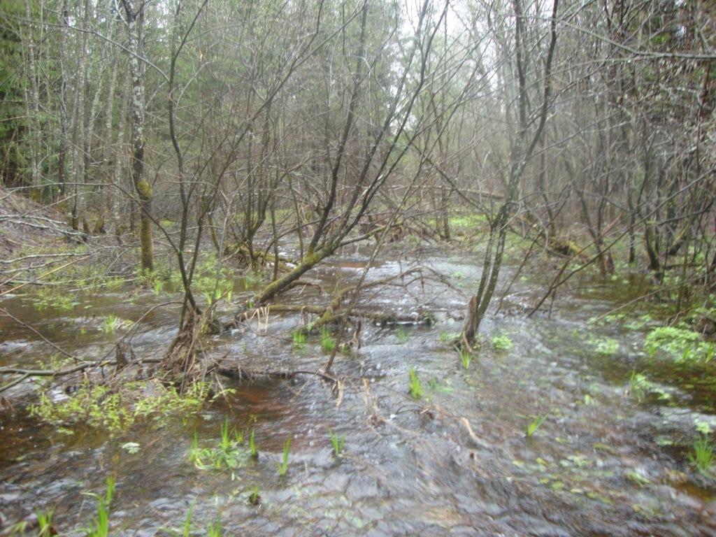 Весеннии ручьи.