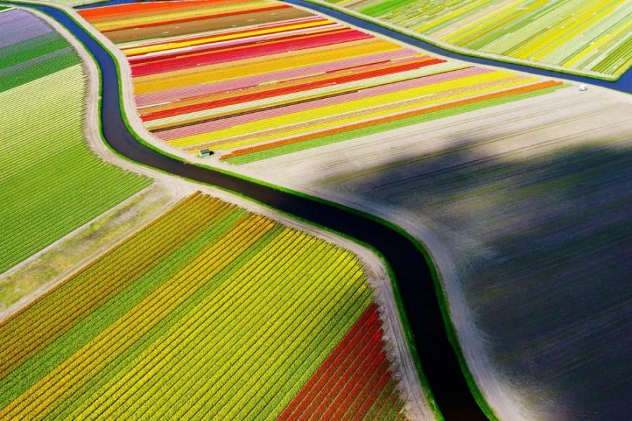 2. Тюльпановые поля в окрестностях города Ворхаут в Нидерландах.