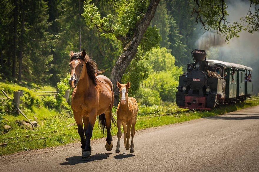 44. Ватра-Молдовицей. (Фото: Лаврентий Парашив)