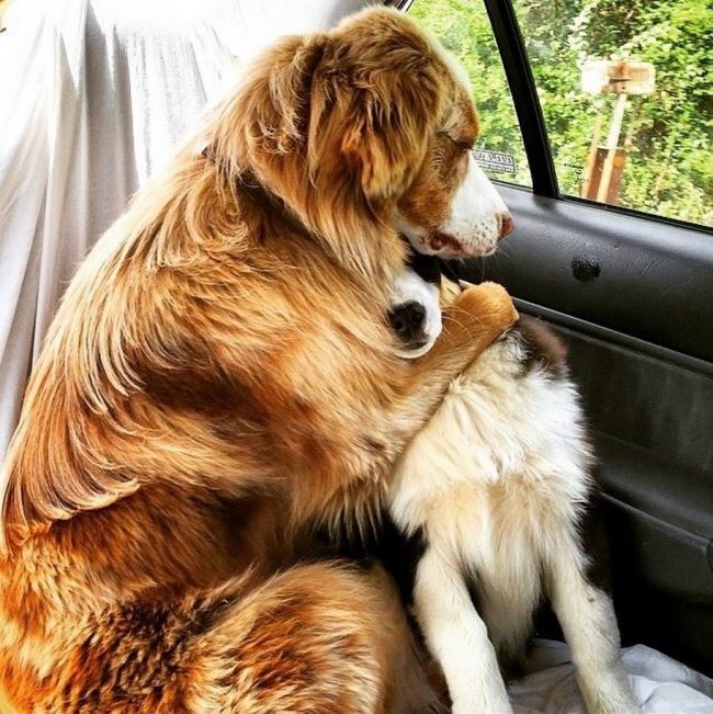 © Just_scrolling_thru  Мой пес думает, что должен отстоять очередь, чтобы получить вкусняшку.