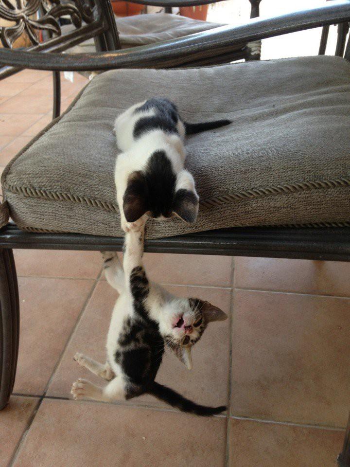 Я думаю, тебе нужна моя помощь!