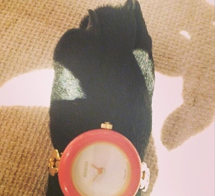 Это крольчиха топ-модели Кары Делевинь, ее зовут Сесиль. Девушка просто обожает питомицу, но, по ее