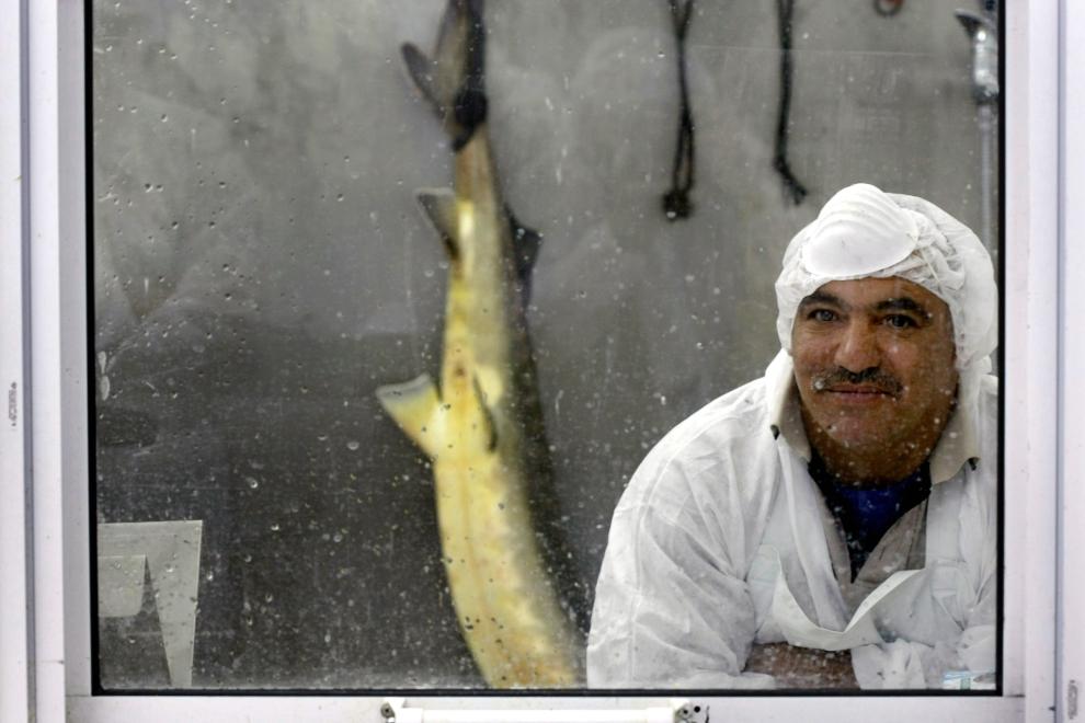 17. В Израиле осетр спросом совсем не пользуется, а все потому, что осетр — рыба некошерная. У кошер