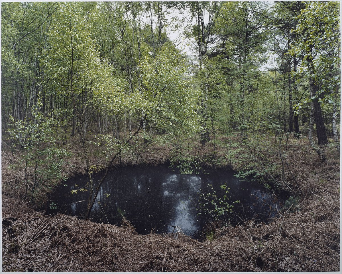 "Henning Rogge, ""#54 (Altwarmbuchener Moor)"" (2013), Analogue C-print, 18 3/16 x 22 inches"