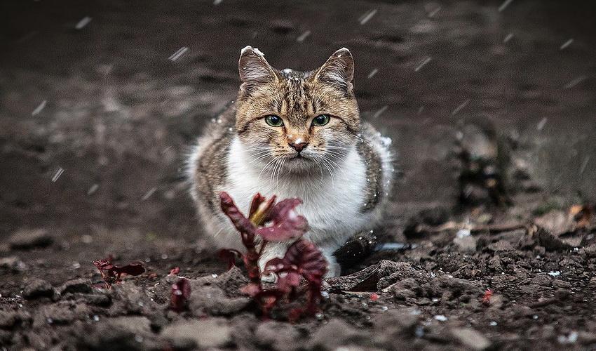Animal Portraits by Sergey Polyushko