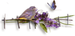 cluster oiseau.png