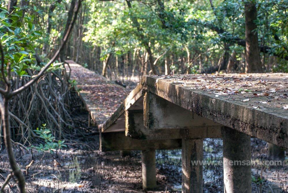 Мангровый лес в Банг Табуне