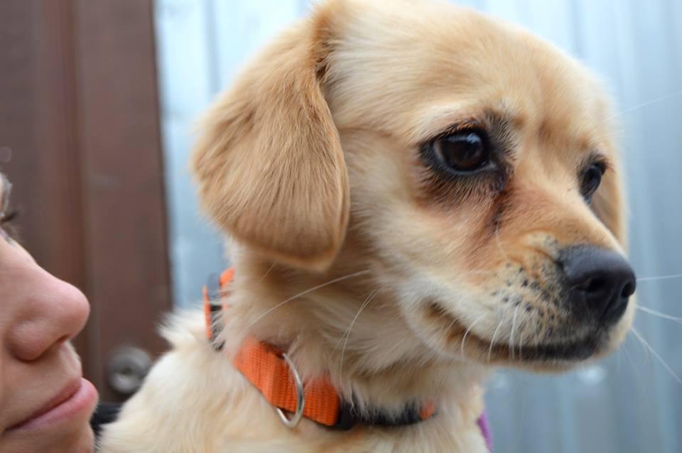Минни собака из приюта догпорт