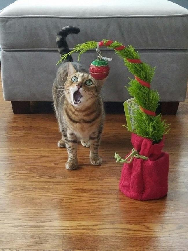 20бесподобных котов, вступивших внеравный бой сновогодними украшениями (27 фото)