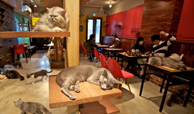 Котики— это уют имилота, ияпонцы это знают. Поэтому они открыли десятки кафе, главная фишка котор