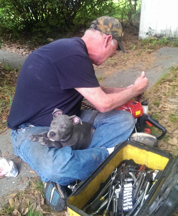 «Мой папа любит распространяться о том, что он терпеть не может собак… Но я всегда застаю его