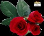12930417578_fleurs_nikita.png
