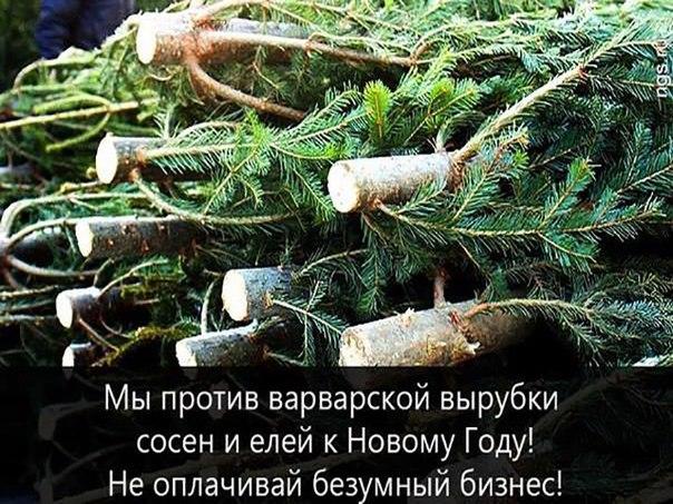 Сколько можно на новый год ставить в домах идол — виде елки