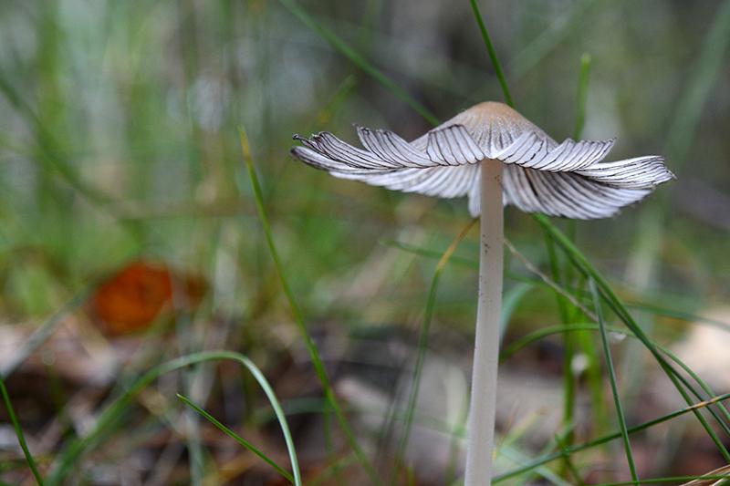 грибной мир 16 6.jpg