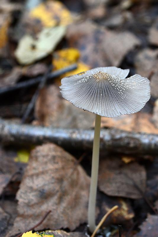 грибной мир 16 20.jpg