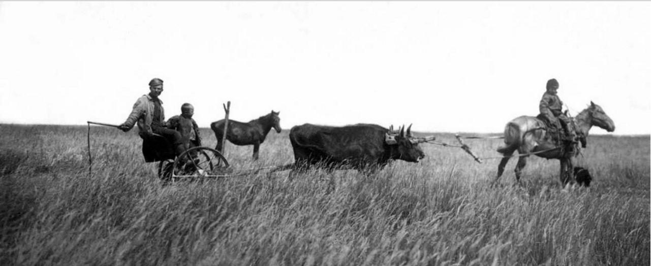 1926. Троицкий округ. Уборка урожая переселенцами
