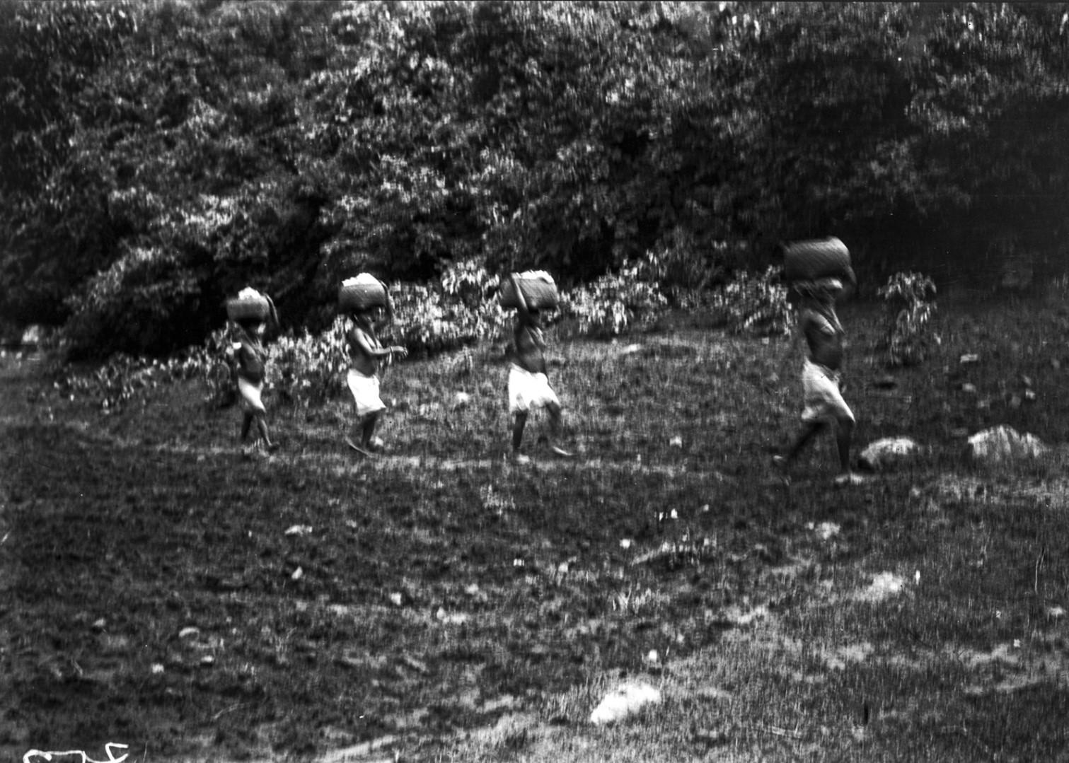797. Орисса. Женщины в пути на рисовое поле