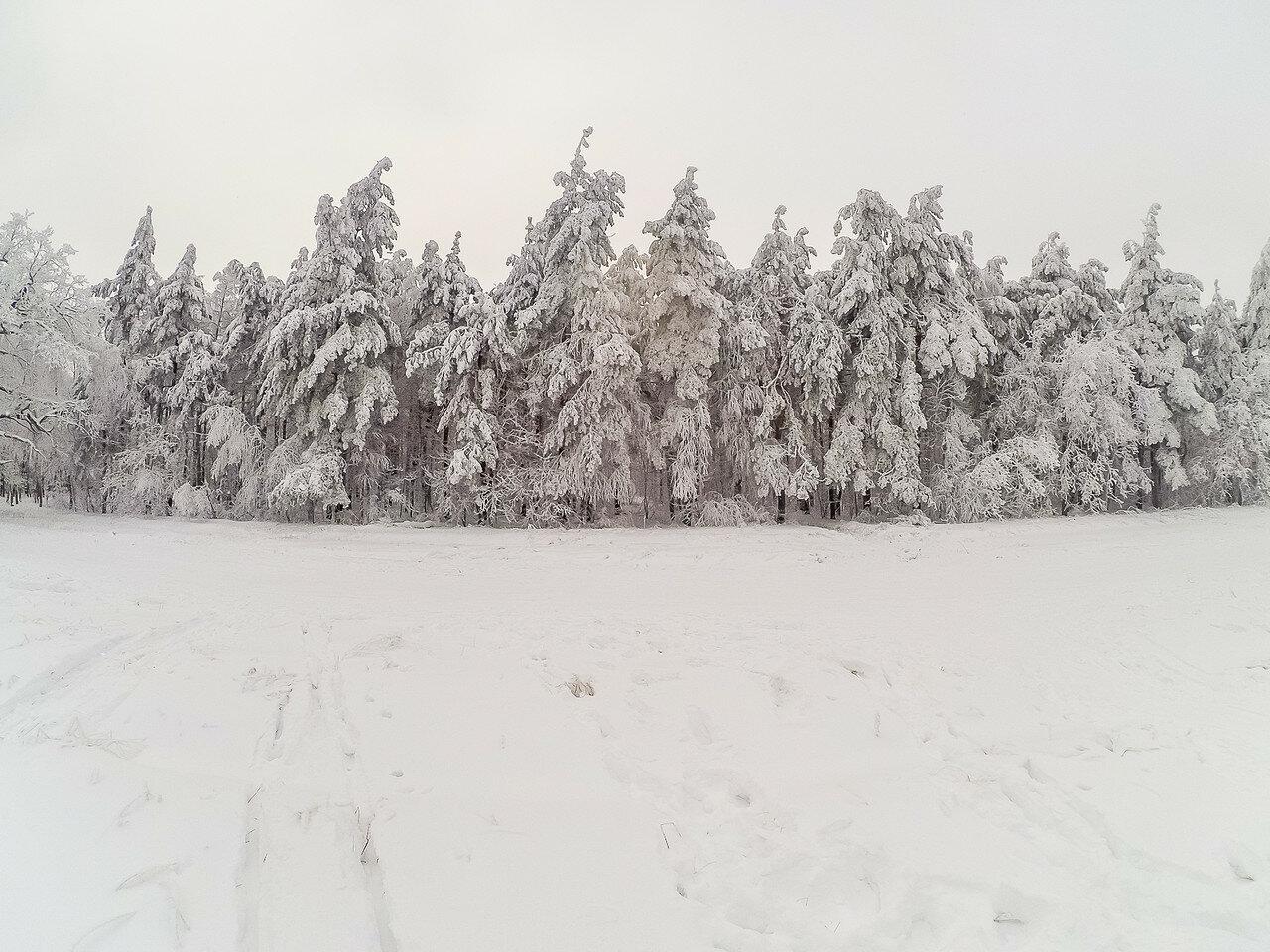 Немного снежного, с лыжных прогулок. фото 5