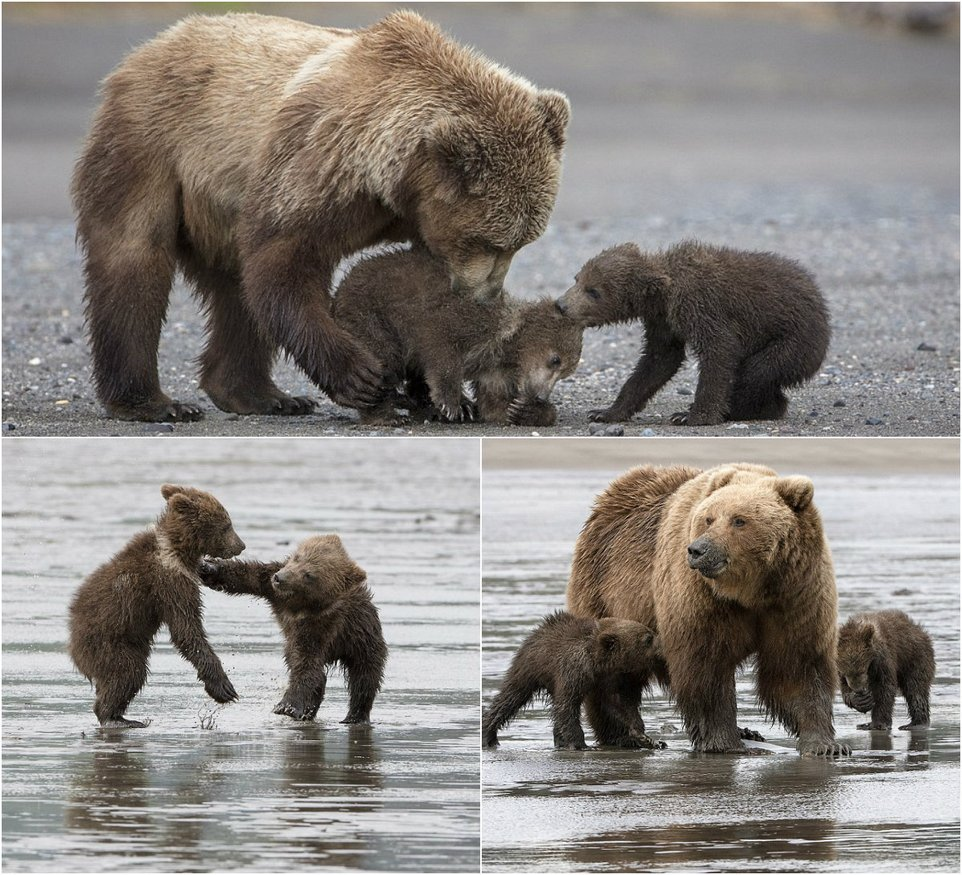 Mom-bear with 4-month toddlers