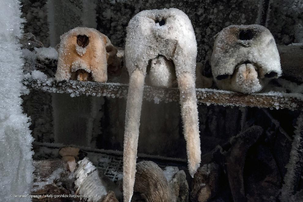 18. Коллекция зубов мамонта на стеллажах хранилища: