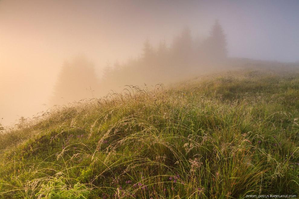 5. Когда солнце поднялось, туман немного опустился вниз, открывая верхушки леса.