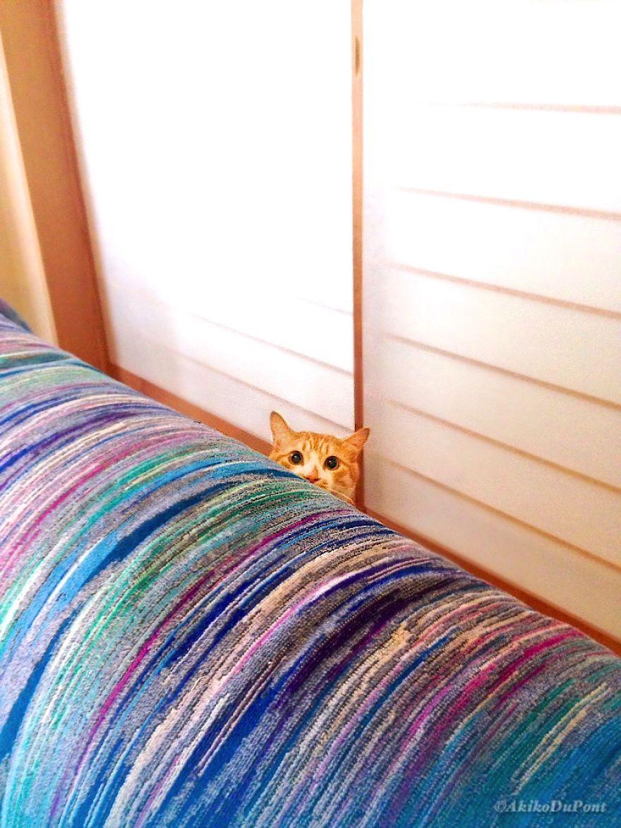 Кот всегда где-то рядом.