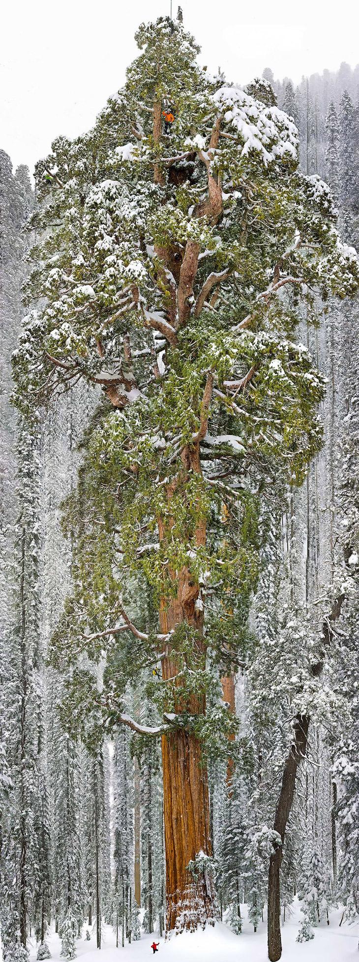 2. Лес, Австралия. (Фото Alex Wise):