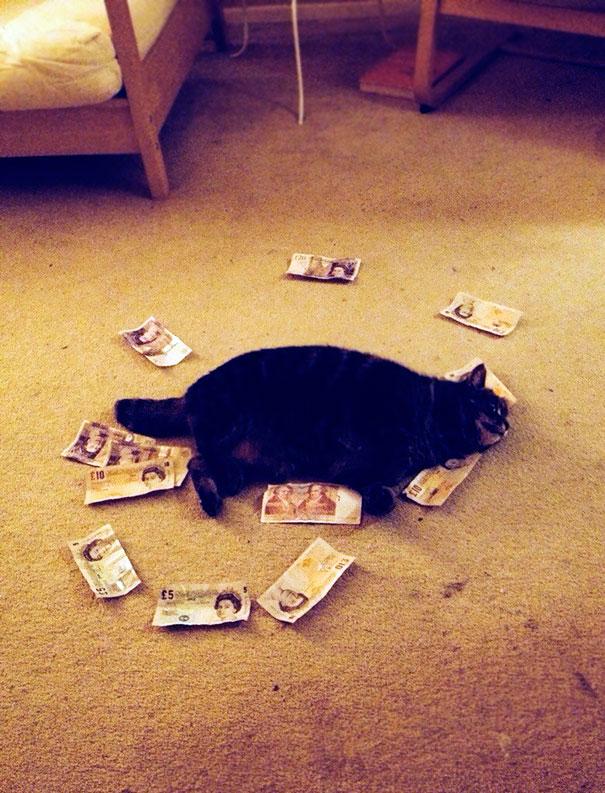 «Я оставила бойфренда дома с котом на один день, а когда вернулась, увидела это».
