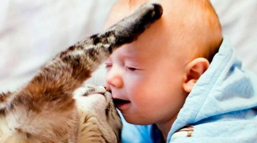 Домашние животные спасают детей отожирения— Ученые
