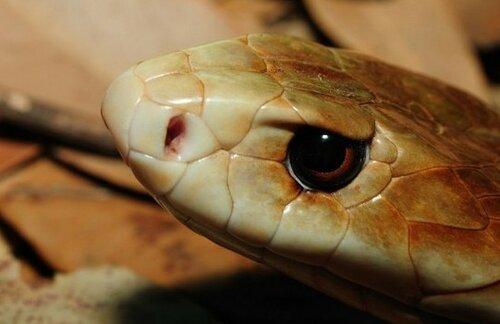 Люди крайне редко умирают от укуса змеи или паука