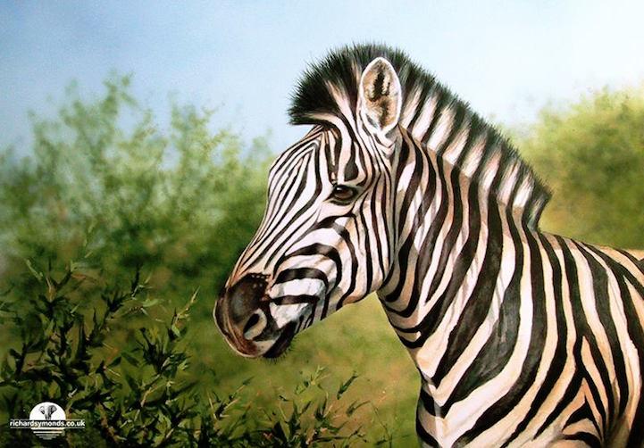 A vida selvagem retratada por Richard Symonds (5 pics)