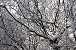 Снежно-скумпиевое кружево