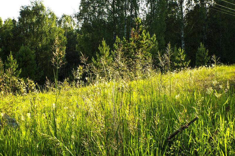 Высокая трава-мурава